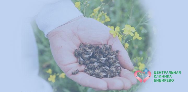 Лечение пчелиным подмором в Центральной клинике района Бибирево